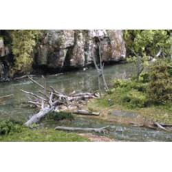 Árboles muertos (troncos y ramas).