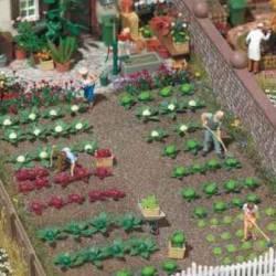Plantas de huerta: repollos y lechugas.