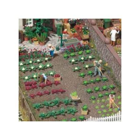 Plantas de huerta: repollos y lechugas. BUSCH 1213