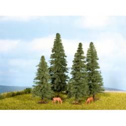 Fir trees.