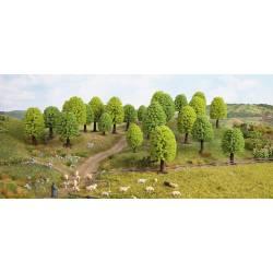 Deciduous trees.