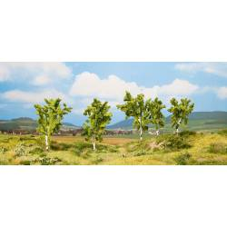 Pear trees.