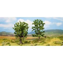 Oak and acacia.