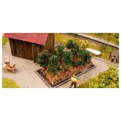 Plantas de tomates.