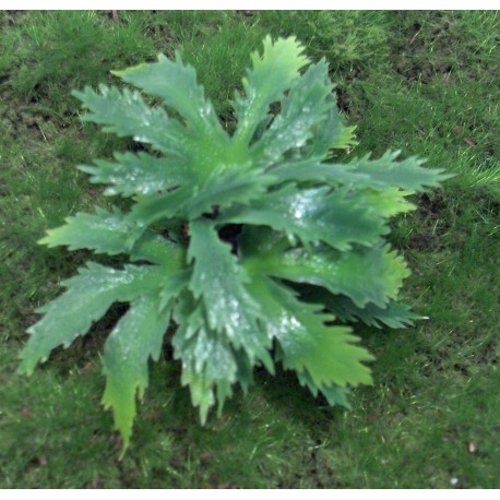 Vegetación de jungla. Tipo 1.