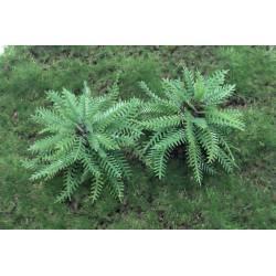 Vegetación de jungla. Palmero.