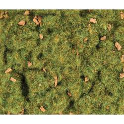 2 mm Spring Alpine Grass.