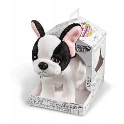 Mascota: perro.