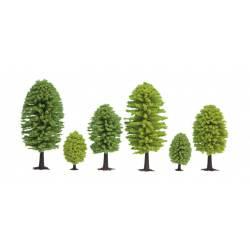 25 árboles de hoja caduca.