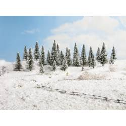 10 snow fir trees.