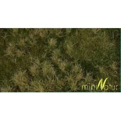 Fertile plain meadow.