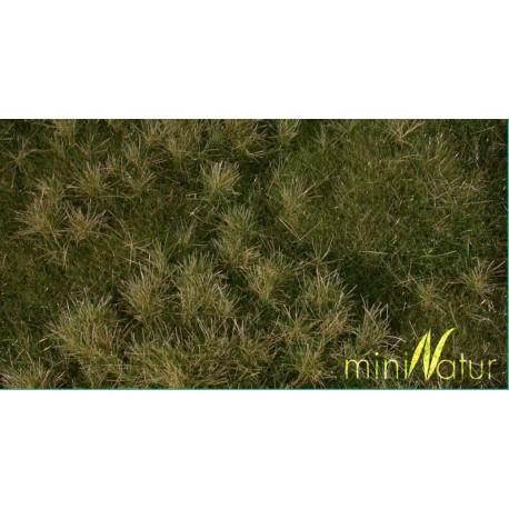 Fertile plain meadow. SILHOUETTE 733-23S