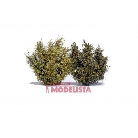 Two shrubs, 8 cm.