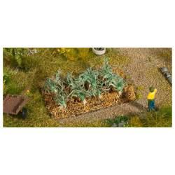 Plantas de colinabo.