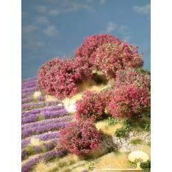 Planta arbustiva en tonos magenta.