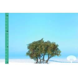 Plantas arbustivas. SILHOUETTE 250-03