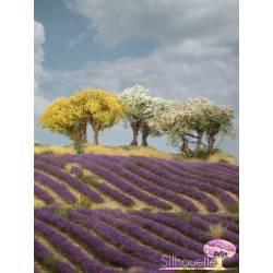 Plantas arbustivas en varios colores. SILHOUETTE 251-05