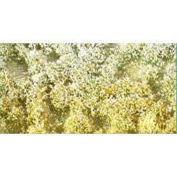 Flores en primavera. SILHOUETTE 726-21