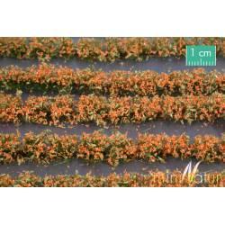 Flower field strips.