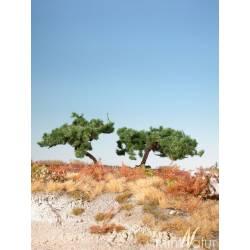 Pinos silvestres. SILHOUETTE 271-02