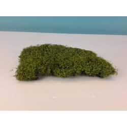 Dos arbustos de 8 cm.