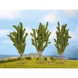 Cypresses.