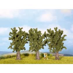 Poplars.