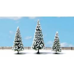 Snow fir trees.