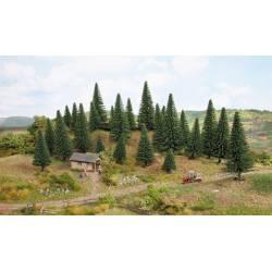50 model spruce trees.
