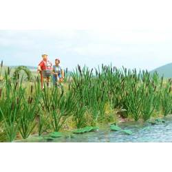 Cattails and bulrush.