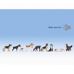 Dogs. Sound scene.