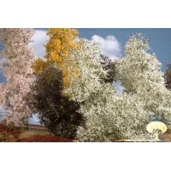 Filigree busch, blooming spring.