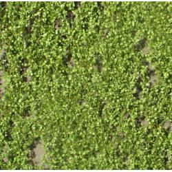 Lombardy poplar foliage. SILHOUETTE 913-21S