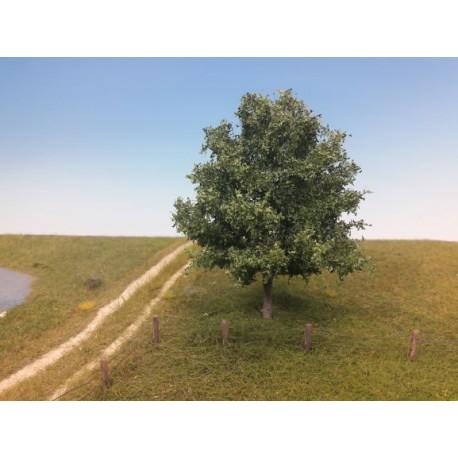 Oak, summer.