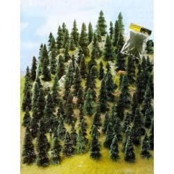 100 pine trees.
