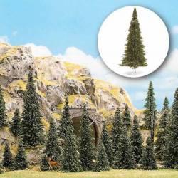 30 pine trees.