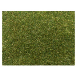 Hierbas silvestres, verde medio.
