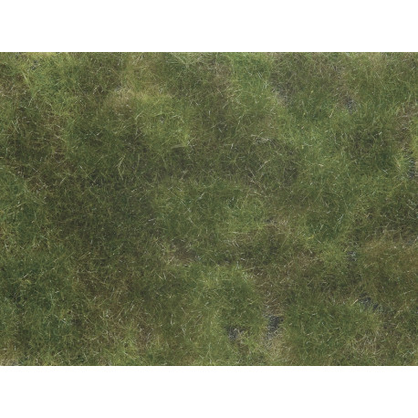 Groundcover Foliage, olive green.