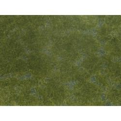 Groundcover Foliage, dark green.