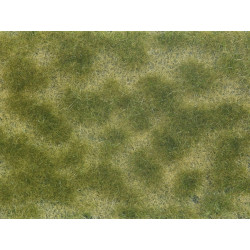 Groundcover Foliage, green/beige.
