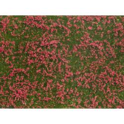 Mata de hierbas, prado rojo.