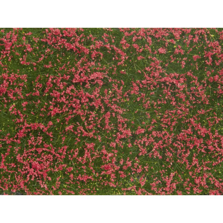 Groundcover Foliage, meadow red.