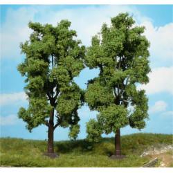 2 ash trees.