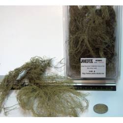 Fine jungle bush. JOEFIX 118