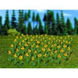 Daffodils. VOLLMER 5123