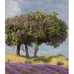 Plantas arbustivas. SILHOUETTE 250-15