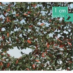 Oak foliage.