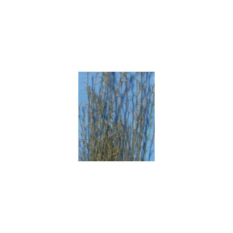 Ramas con hojas. JOEFIX 114