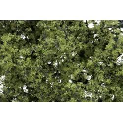 Light green foliage.