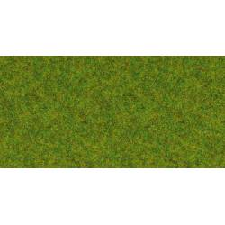 Scatter grass, spring meadow.